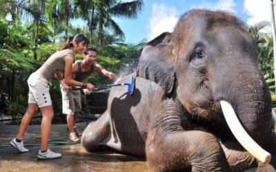 Bathe Breakfast Elephant Ride