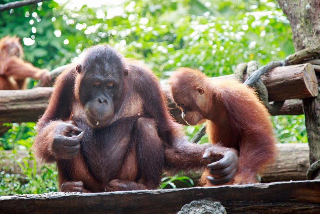 Bali Zoo Park - Fun Things To Do in Bali | Top Attractions