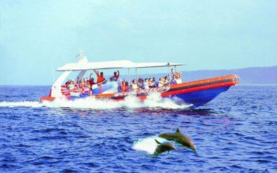 Bali Hai Dolphin Cruise