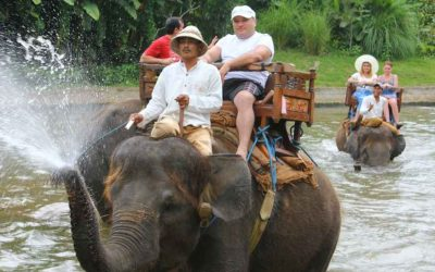 Elephant Ride Tour