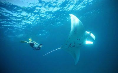 Nusa Penida Snorkeling Trip