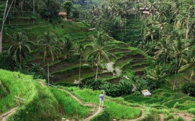 Top Destination of Bali Tour