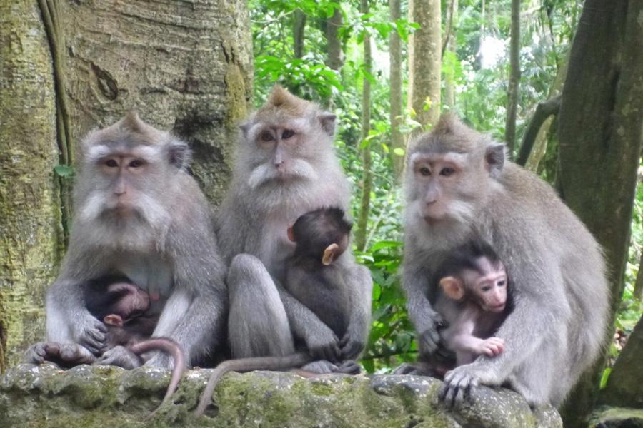 Ubud Monkey Forest | Bali Sun Tours