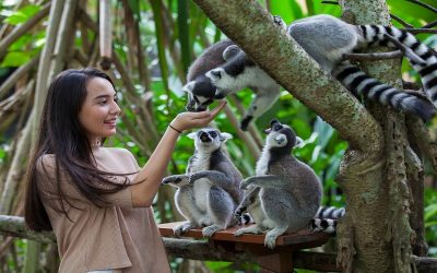 5 Zoos that Must be Visited are for Holidays