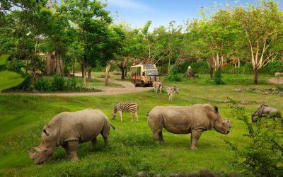 Bali Safari Jungle Hopper