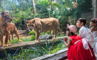 Bali Zoo Admission Ticket