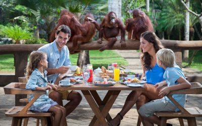B.fast with Orangutans at Bali Zoo
