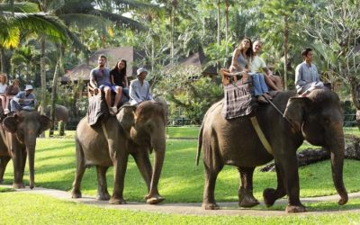 Mason Elephant Safari Ride